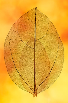 Oranje transparant blad met gele achtergrondverlichting