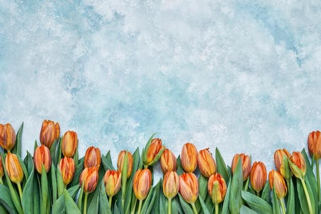 Oranje tulpen op lichtblauwe achtergrond
