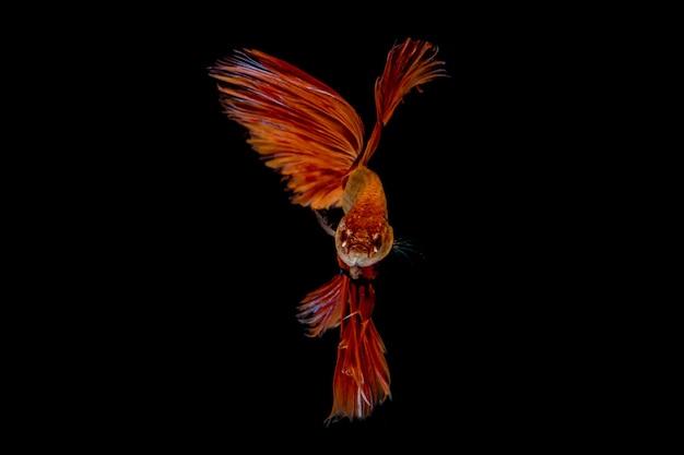 Oranje vis geïsoleerd op zwarte achtergrond
