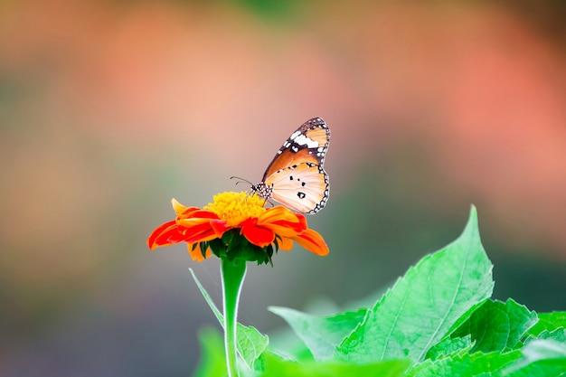 Oranje vlinder op bloem, aardachtergrond