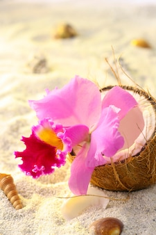 Orchidee binnen een kokosnoot op achtergrond van tropisch strand, zand en slakken.