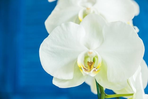 Orchidee bloemen