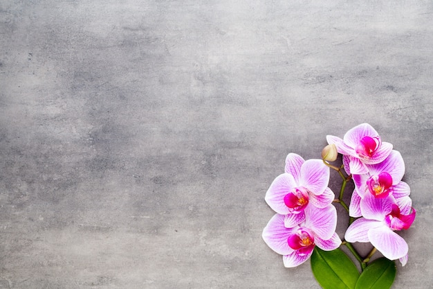 Orchidee en kuuroordstenen op steen. spa en wellness plat leggen.