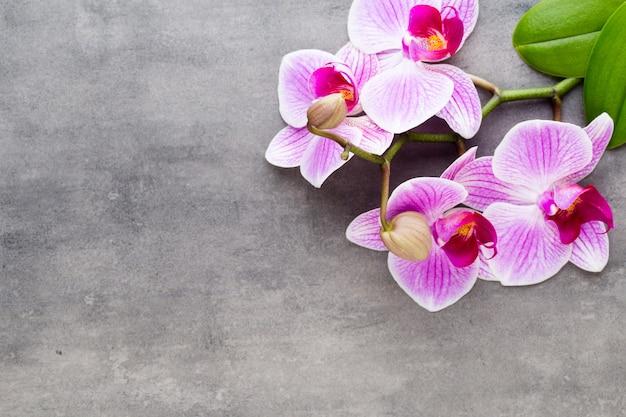 Orchidee en spa stenen op een stenen achtergrond