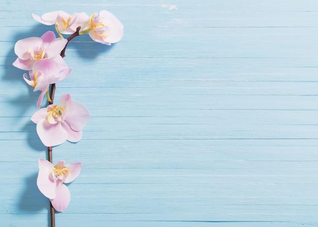 Orchidee op blauwe houten achtergrond