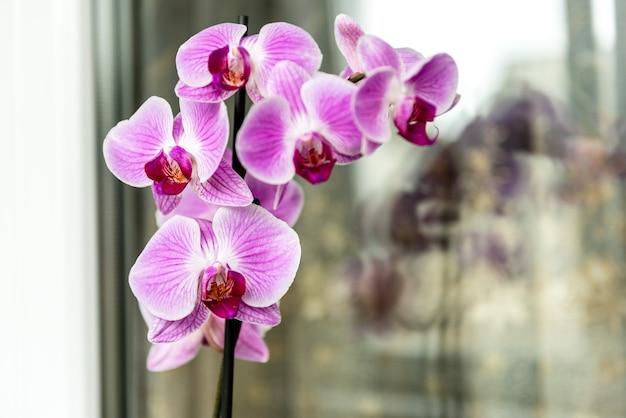 Orchidee op de vensterbank op het balkon