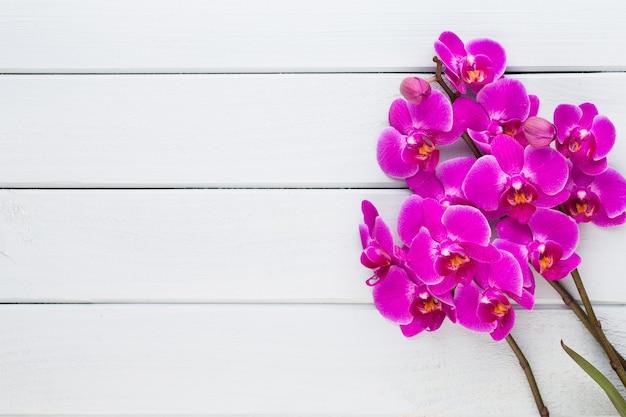 Orchidee op een wit