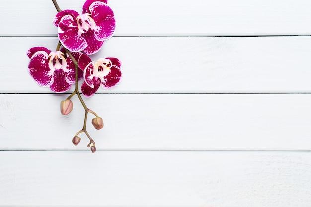 Orchidee op wit. spa en wellnes liggen plat.
