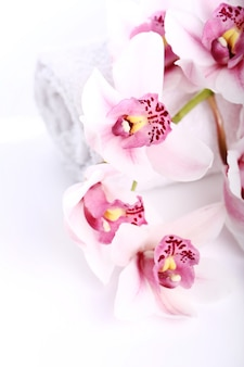 Orchidee op witte achtergrond