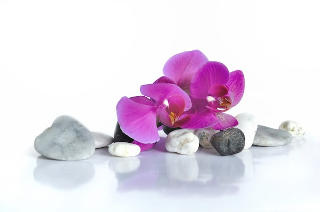 Orchidee voor valentijnsdag