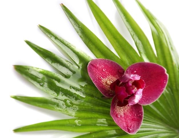 Orchideebloem en palmbladeren, close-up