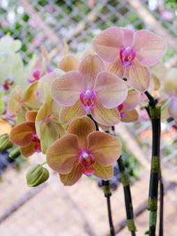 Orchideebloem in tropische tuin. orchideeën bloemen achtergrond