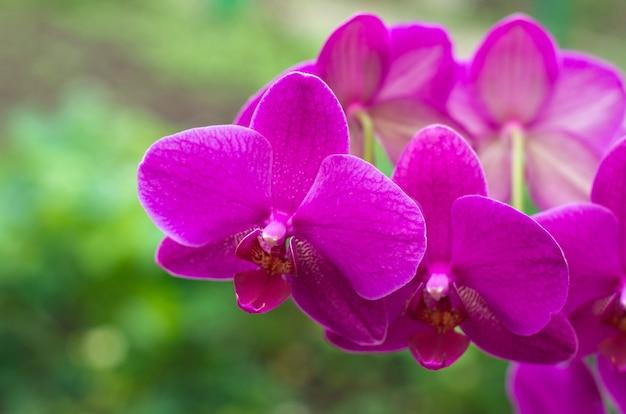 Orchideebloem met groene i