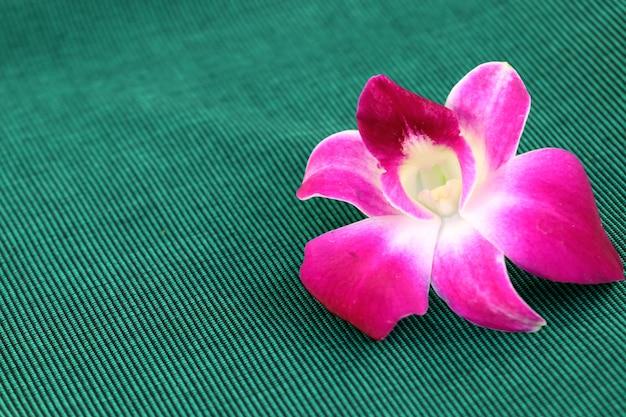 Orchideebloem op handdoek