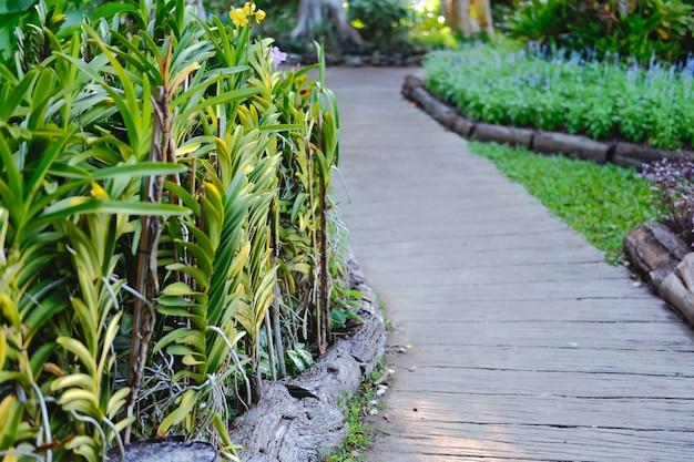 Orchideebloem plant versieren naast loopbrug in de tuin