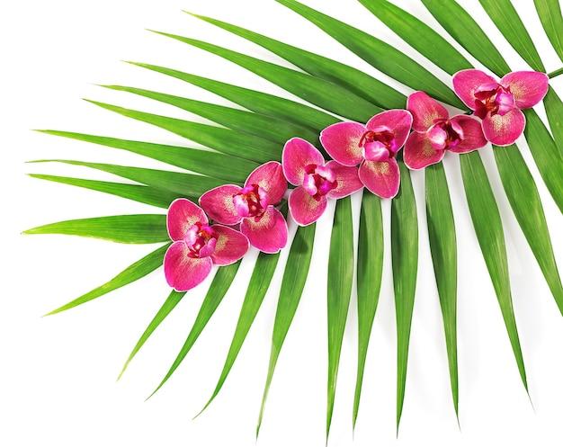 Orchideebloemen en palmbladeren, geïsoleerd op een witte ondergrond
