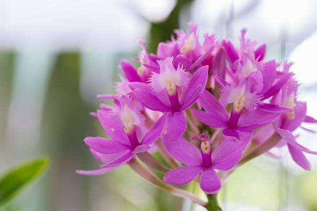 Orchideebloemen in de tuin op zonnige zomer- of lentedag.