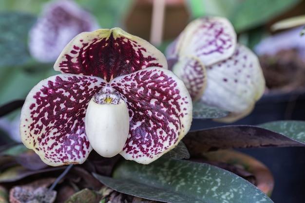 Orchideebloemen in de tuin