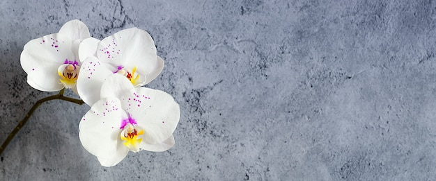 Orchideebloemen op een tak tegen een gepleisterde muur, mockup