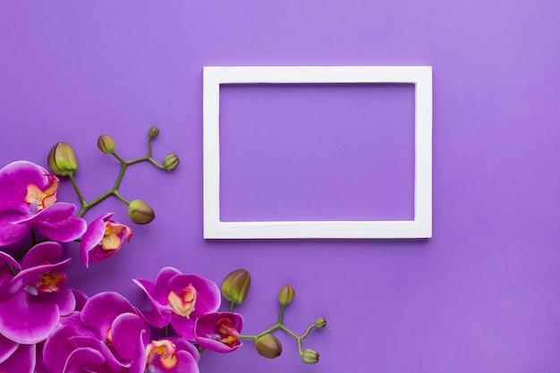 Orchideebloemen op een violette exemplaar ruimteachtergrond