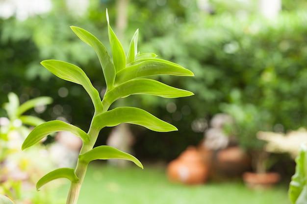 Orchideeclose-up met groene natuurlijke tuin vage achtergrond.