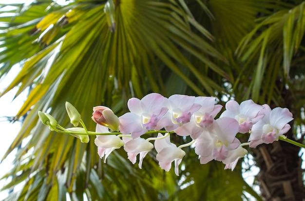 Orchideeën aan de achterkant is een groen blad.