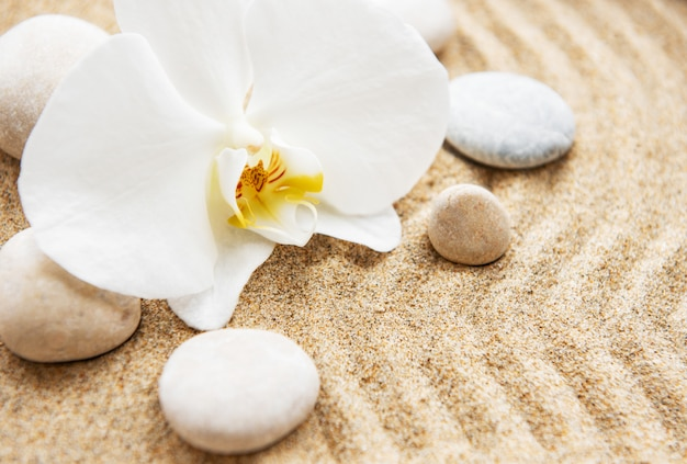 Orchideeën en stenen