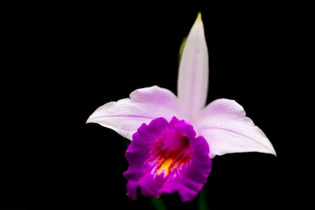 Orchideeën in de tuin hebben een zwarte achtergrond.