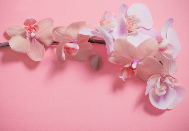 Orchideeën op roze muur