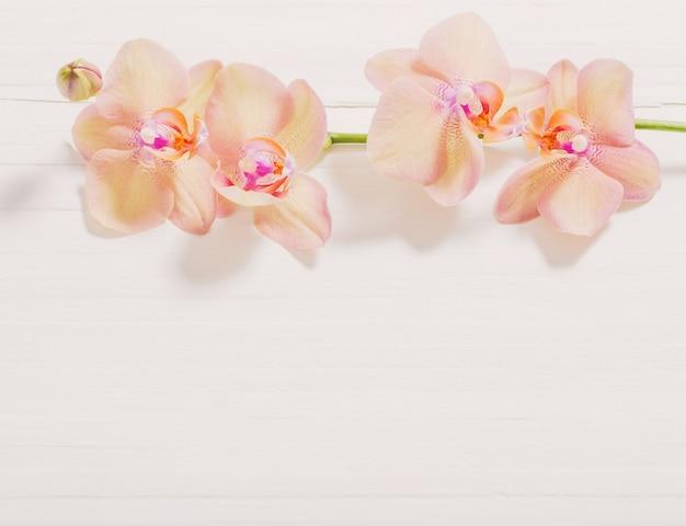 Orchideeën op witte houten achtergrond