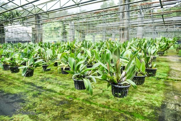 Orchideeënkwekerij met orchidee bloempot opknoping op het dak van de boerderij in de kwekerij /