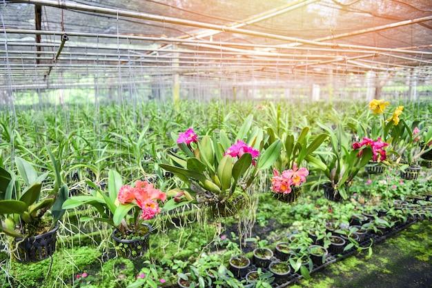 Orchideeënkwekerij met orchideebloemen