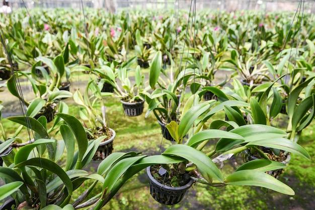 Orchideeënkwekerij met orchideebloempot die op de boerderij hangt