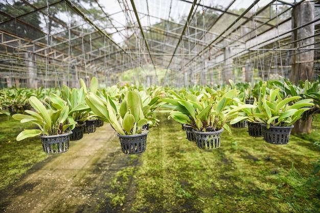 Orchideeënkwekerij