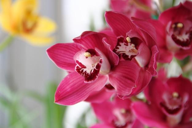 Orchideeënteelt