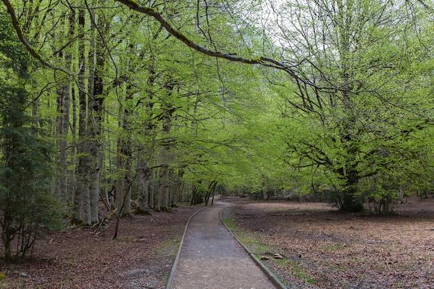 Ordesa-weide in de lente, het nationale park van ordesa en monte perdido.