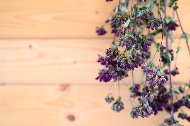 Oregano bundelt droge geneeskrachtige kruidenplant hangend drogen