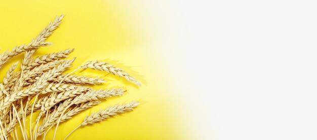 Oren van tarwe en granen op geel en wit gekleurd papier achtergrond met schaduwen van zonlicht. herfst oogst van graangewassen