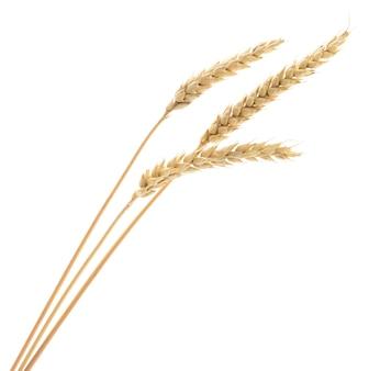 Oren van tarwe op wit