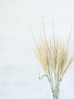 Oren van tarwe van een lichtgroene pastelkleur in vaas op een witte achtergrond