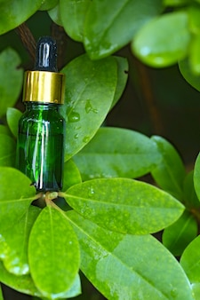 Organic botanical serum. natuurlijke organische extractie. groene glazen fles met een pipet in heldere, sappige groene bladeren