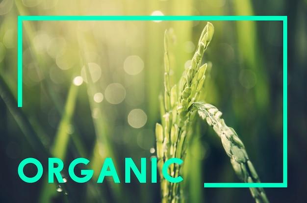 Organisch natuurlijk save planet-concept