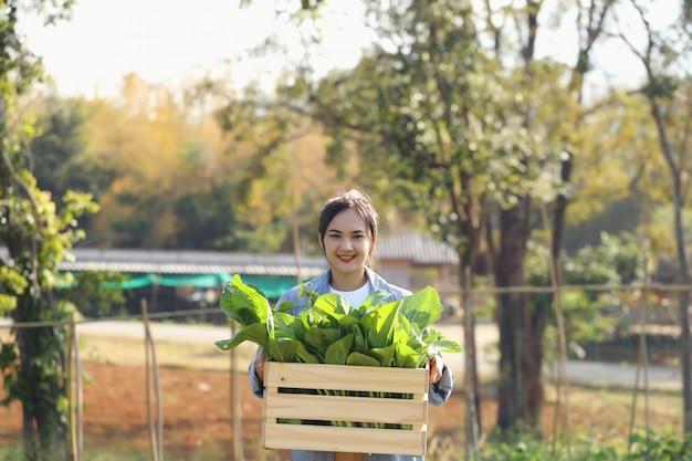 Organische tuiniers jonge vrouwen plukken groenten in houten kratten om te leveren aan klanten in de ochtend.