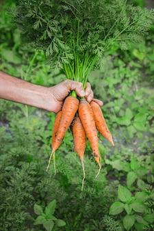 Organische zelfgemaakte groenten in de handen van mannen.