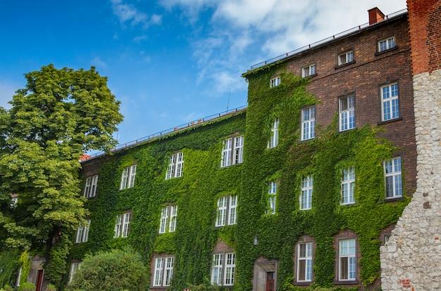 Oud bakstenen huis met voormuur die door groene klimop op zonnige de zomerdag wordt behandeld