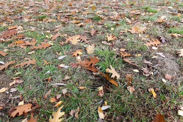 Oud de herfstgebladerte - gefotografeerd close-up van oude de herfstbladeren die op de grond liggen, gevallen bladeren, kleine scherptediepte