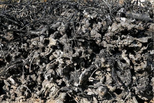 Oud gedroogd gedroogd wijngaard gestapeld boomstambrandhout