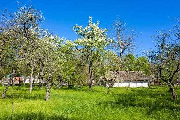 Oud huis met strodak in prachtige groene lentetuin luchtfoto.