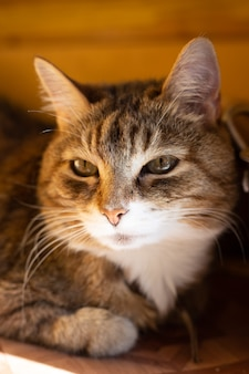 Oud liggend kattenportret in zonlicht close-up
