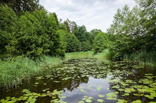 Oud meer met groeiende waterlelies